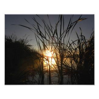 Sun detrás de las cañas impresion fotografica