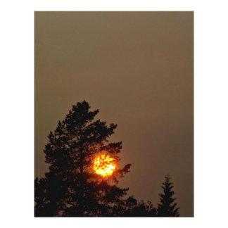 Sun detrás del árbol tarjetas publicitarias