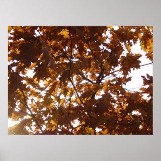 Sun Diamond on Fall Leaves Posters