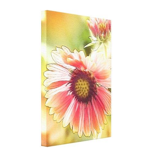 Sun Drenched Gaillardia Flowers Canvas Print
