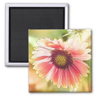 Sun Drenched Gaillardia Flowers Magnet