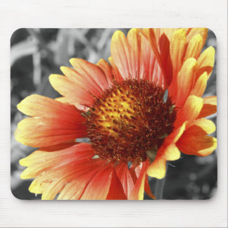 Sun Drenched Gaillardia Mouse Pad