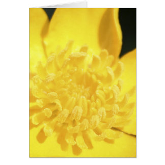 Sun Drenched Golden Buttercup blank notelet Card