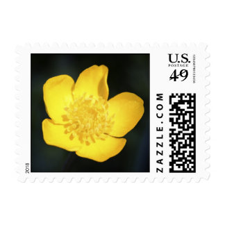 Sun Drenched Golden Buttercup Postage