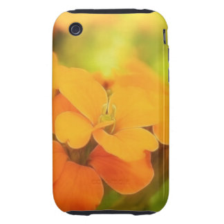 Sun Drenched Siberian Wallflower iPhone 3 Tough Covers