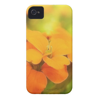 Sun Drenched Siberian Wallflower iPhone 4 Cases