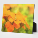 Sun Drenched Siberian Wallflower Photo Plaque