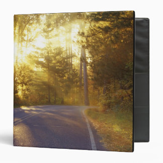 Sun estalla a través del bosque sobre el camino en