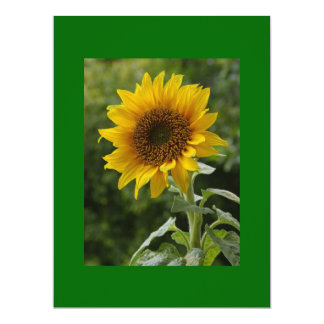 Sun Flower3 Card