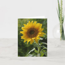 Sun Flower3 Holiday Card
