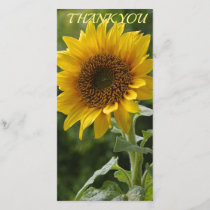 Sun Flower3 Thank You Card