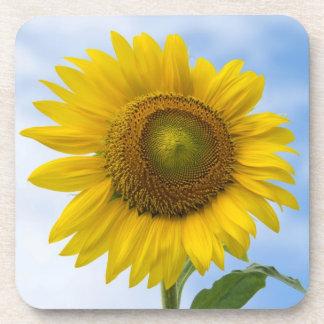 Sun Flower Against Blue Sky Drink Coasters