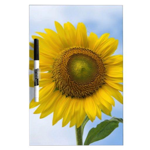Sun Flower Against Blue Sky Dry Erase Whiteboards