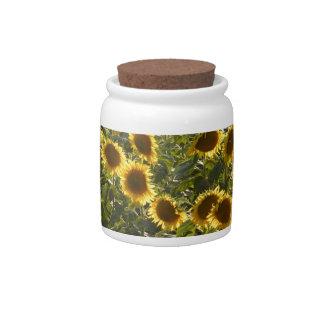 _sun flower field candy dish