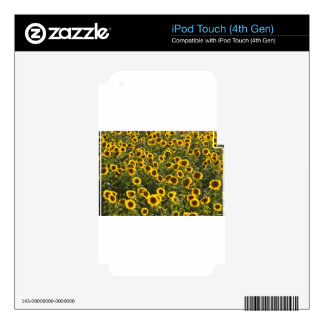_sun flower field decal for iPod touch 4G