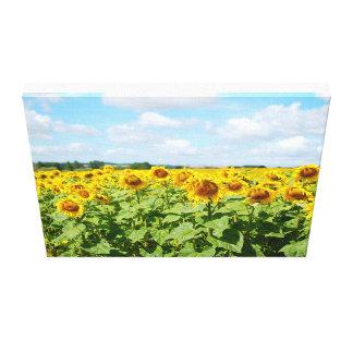 Sun Flower Field in France Canvas Print
