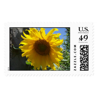 Sun Flower Stamps