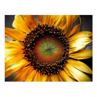 Sun Flower Postcard
