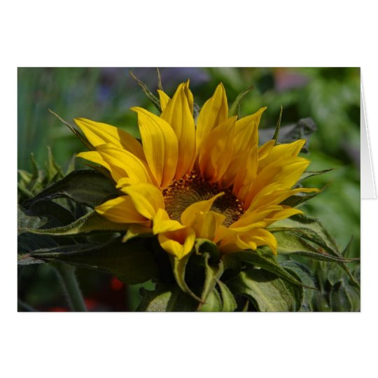 Sun Flowers Card