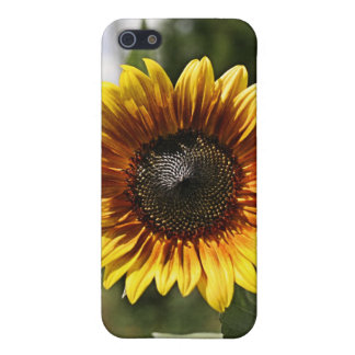 Sun Flowers Cover For iPhone SE/5/5s
