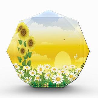 Sun, girasoles, flores blancas