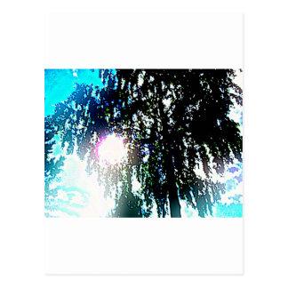 Sun glare postcard