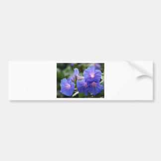 Sun Illuminated Blue and Lavender Morning Glories Bumper Sticker