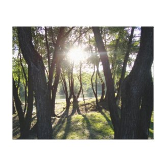 Sun in the forest gallery wrapped canvas