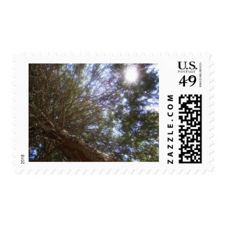 Sun in the Forrest Postage Stamp