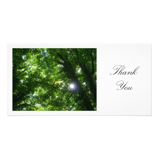 Sun in the Trees - Thank You Card