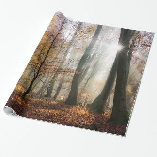Sun irradia el bosque brumoso místico, regalo papel de regalo
