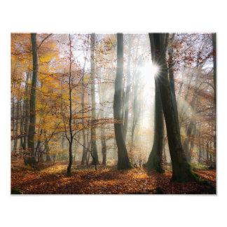 Sun irradia el bosque escénico brumoso místico - cojinete