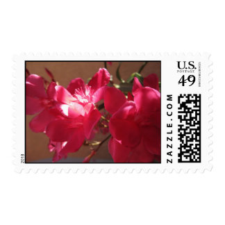 Sun Kissed (1) Postage Stamps