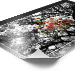 Sun Kissed Cherry Blossoms Photographic Print