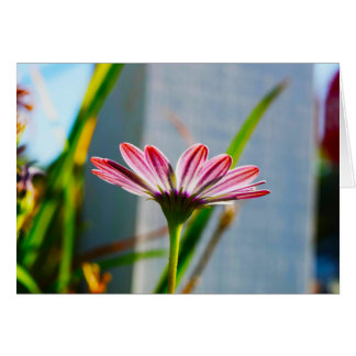Sun Kissed Floral Photography Blank Greeting Card