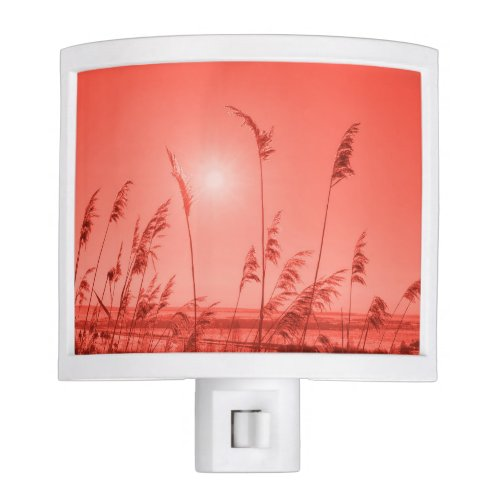 Pantone 2019 Living Coral - Sun-kissed wheat in coral night light