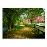 Sun light on Prunus Park Postcards