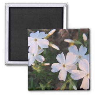 Sun lit floral Magnet