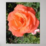 Sun mojó la impresión del rosa posters
