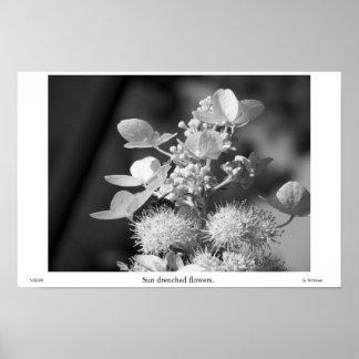 Sun mojó las flores en grayscale impresiones