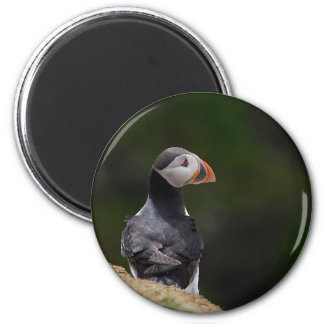Sun on it's Back Puffin 2 Inch Round Magnet