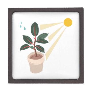 Sun On Plant Premium Keepsake Boxes