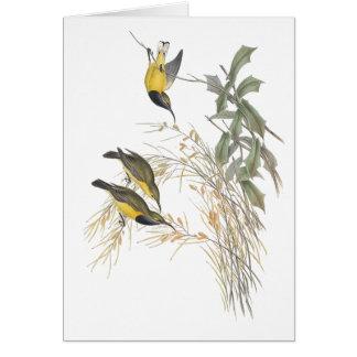 Sun-pájaro australiano tarjeta de felicitación
