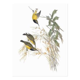 Sun-pájaro australiano tarjetas postales