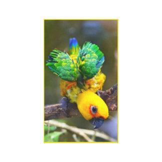 Sun Parakeet Canvas Print