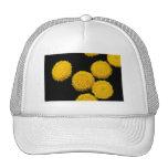 sun pies trucker hats