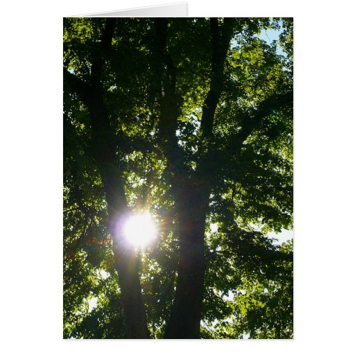 Sun que brilla a través de árboles tarjeta de felicitación