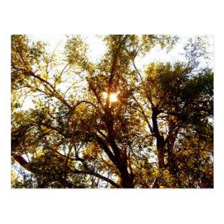 Sun que brilla a través de la postal de las ramas