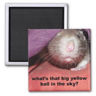 sun 'rats talking' magnet