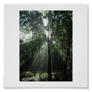 Sun Rays, Misty Morning Poster